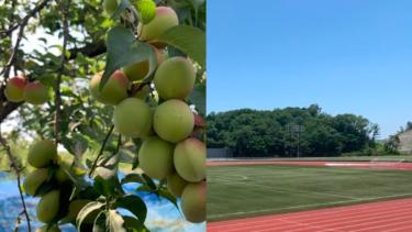「サッカークラブ×移住×農業」で地域創生を。南紀オレンジサンライズFCがクラウドファンディングを開始